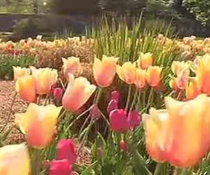 Biltmore-Flowers-2sm
